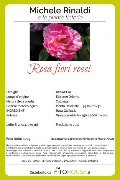 rosa_fiori_rossi